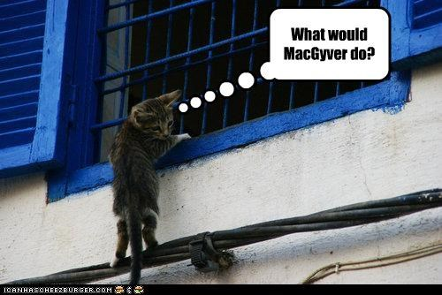 caption captioned cat dangling macgyver question what-would-____-do window windowsill - 4104137216