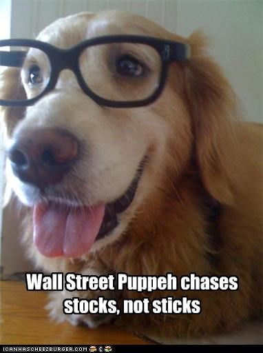 chase,chases,chasing,glasses,golden retriever,not,sticks,stocks,Wall Street