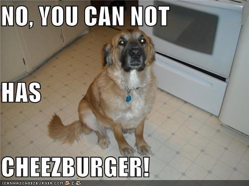 Cheezburger Image 4104281344