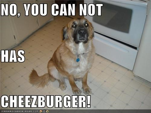 Cheezburger Image 4104281344