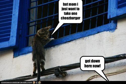 Cheezburger Image 4104474368