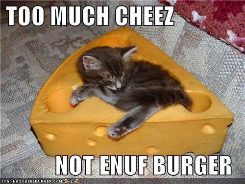 Cheezburger Image 4104561408