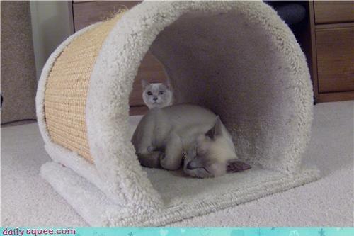 cat kitten tonk - 4104753152