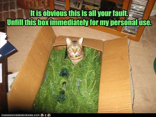 all your fault,box,caption,captioned,cat,demand,empty,immediately,it is,obvious,obviously,unfill