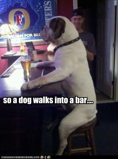 bar,bar stool,bear,beginning,bulldog,cliché,Hall of Fame,into,joke,sitting,stool,walks