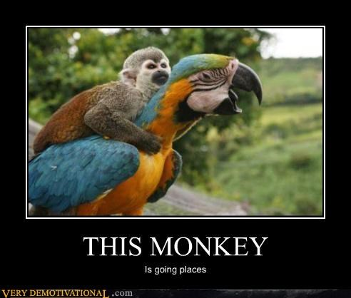 adventure,animals,awesome,cute,monkey,parrot,Pure Awesome