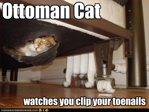 caption captioned cat ceiling cat clipping ottoman ottoman cat relative toenails watching you - 4105383936