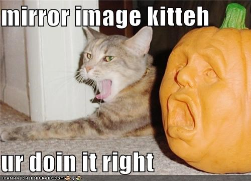 caption,captioned,cat,doing it right,halloween,imitation,meowloween,mirror,mirror image,posing,pumpkins