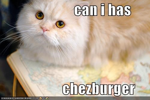 Cheezburger Image 4107451392