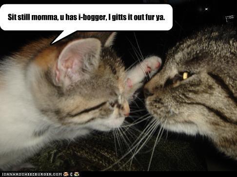 Cheezburger Image 4107759104