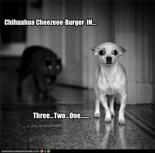 Cheezburger Image 4108068864