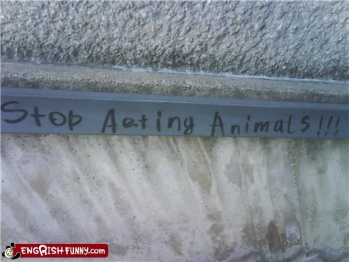 animals,graffiti,spelling