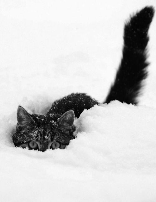 a list of animals in the snow enjoying the winter