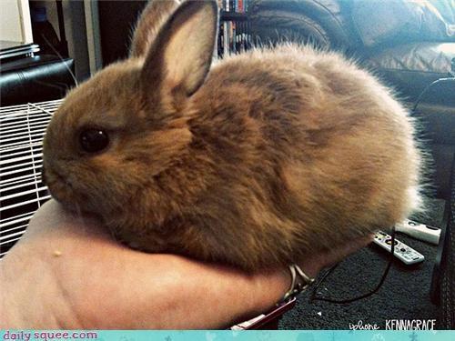 bunny furball happy bunday pet rabbit reader squee - 4108447488