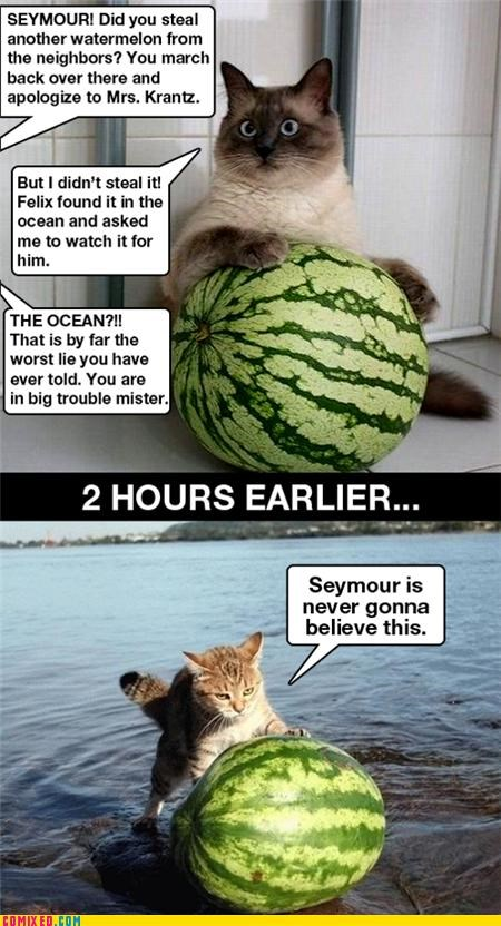 animals,Cats,cute,lies,watermelon