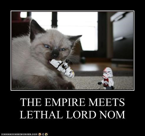 caption captioned cat empire Hall of Fame kitten legos lord nomming noms star wars - 4108719616