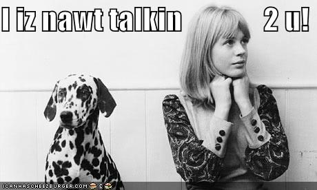 away,dalmatian,grudge,human,looking,not,pretty,silent treatment,speaking,talking,themed goggie week,upset,woman