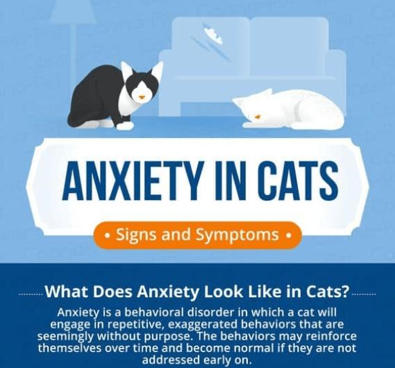 infographics describing anxiety in cats