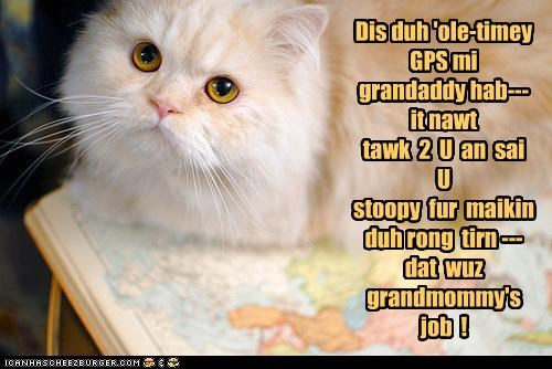 caption,captioned,cat,gps,grandma,Grandpa,map,old,old timey,outdated,persian,tabby,technology