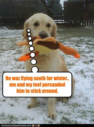 He waz flying south fur winter.. me and my teef persuaded him to stick around.