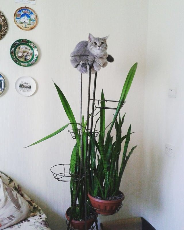 a funny and cute list of cats fitting into anything