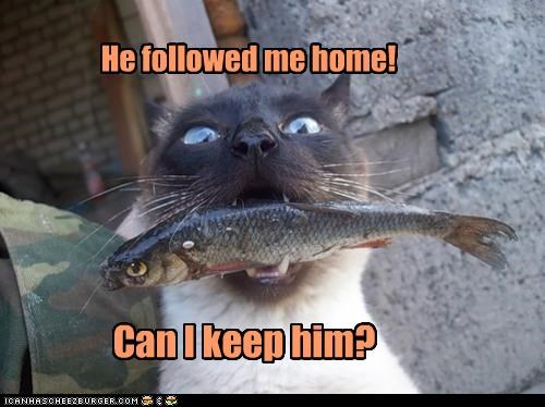 asking,caption,captioned,cat,fish,followed,food,home,keep,noms,pet,please,question,siamese