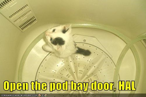 caption captioned cat famous kitten Movie phrase quote trapped - 4110043392