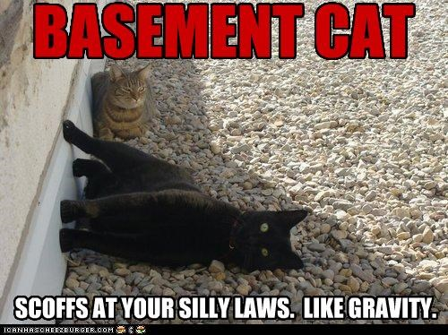 BASEMENT CAT SCOFFS AT YOUR SILLY LAWS. LIKE GRAVITY.