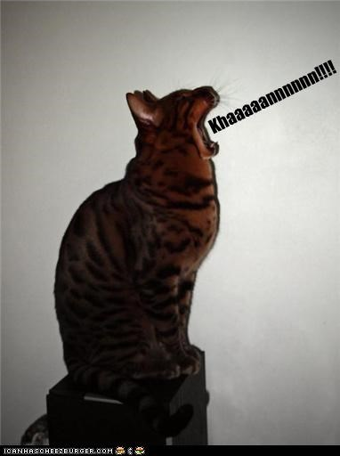 angry caption captioned cat curses cursing exclamation Star Trek - 4110210304