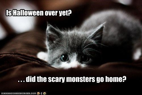 halloween,kitten,costumed critters,g rated,Cats