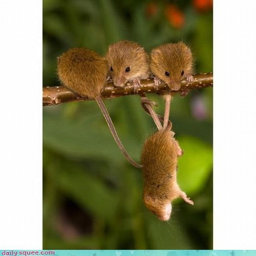 acting like animals help mice mission recovery rescue sunflower seeds supervising tail tails teamwork winch - 4110402816