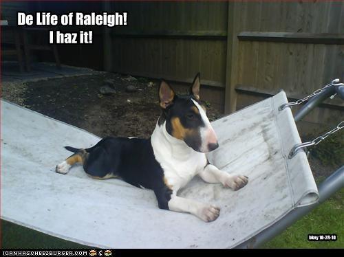 De Life of Raleigh! I haz it! bkey 10-28-10