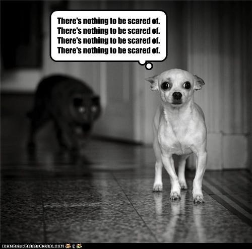 afraid,best of the week,caption,captioned,cat,chihuahua,creeping,do not want,dogs,fear,Hall of Fame,mantra,repeating,scared,stalking