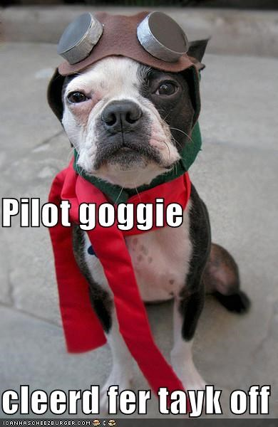 boston terrier cleared costume cute dressed up goggles pilot scarf takeoff