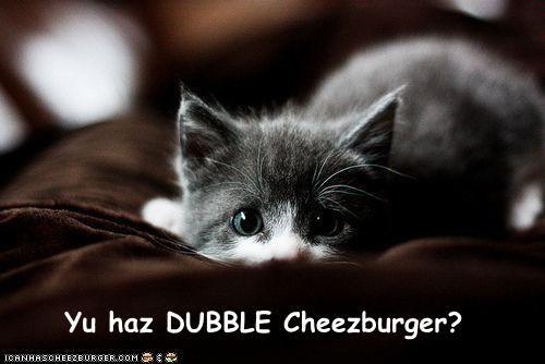 Cheezburger Image 4111983360
