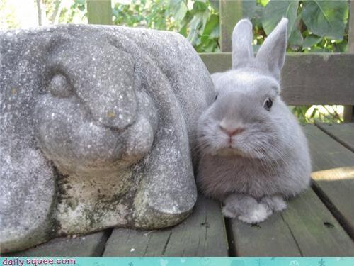 bunny,lookalikes,rabit