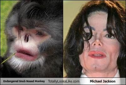 Hall of Fame michael jackson monkey nose plastic surgery snub nosed monkey