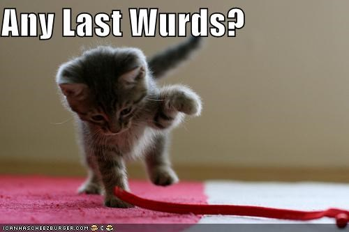 any-last-words,caption,captioned,cat,cute,kitten,last,looming,paw,question,raised,string,words