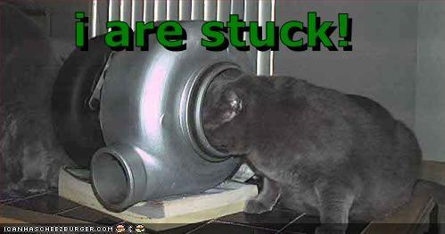 Cheezburger Image 411400448