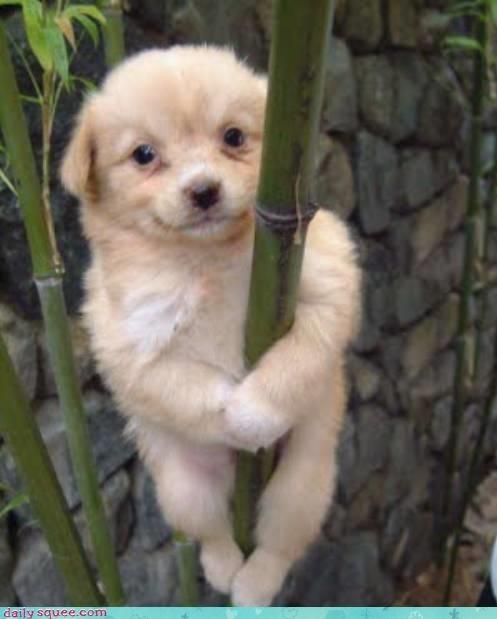 baby cute puppy - 4114109184