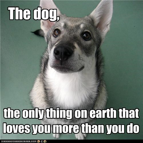 The dog, the only thing on earth that loves you more than you do