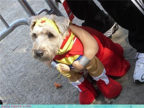 costume dogs halloween - 4114499328