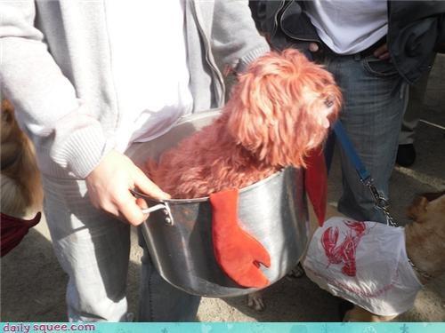 costume dogs halloween - 4114515968