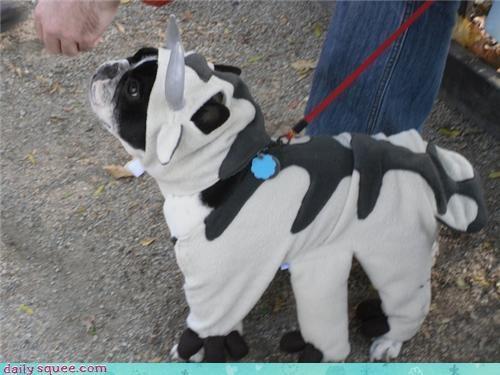 costume dogs halloween - 4114524160