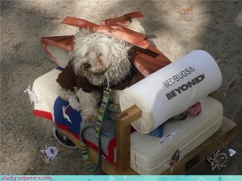 costume dogs halloween - 4114540544