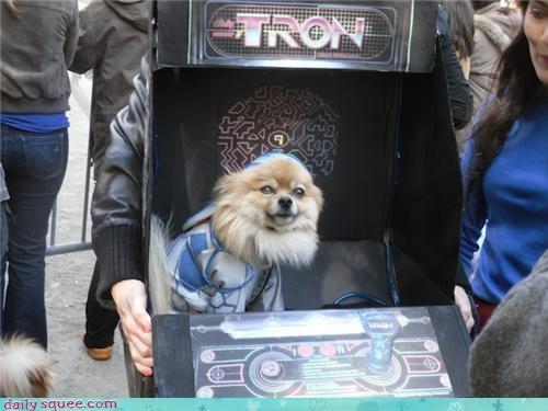 costume dogs halloween - 4114656512