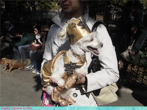 costume dogs halloween - 4114682880