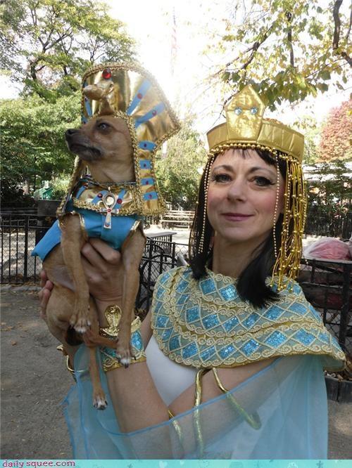 costume dogs halloween - 4114697216
