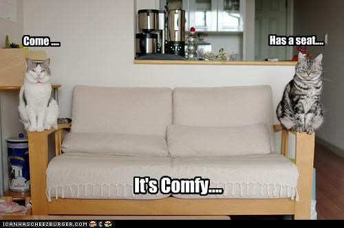 caption captioned cat Cats come comfy couch have a seat lying reassurance trick - 4114888704