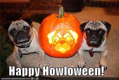 Hall of Fame halloween happy happy sundog howloween jack o lanterns pug pumpkins - 4115842816